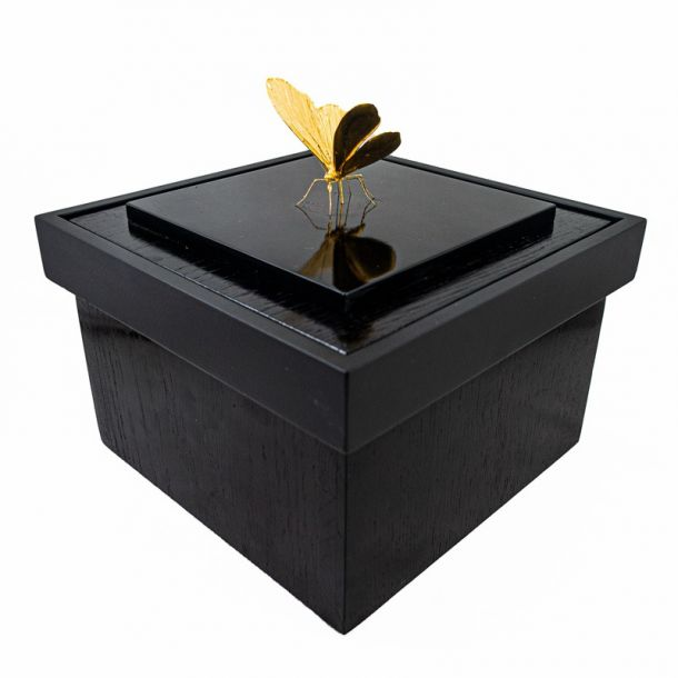 Samuel Dejong Anatomia Box Series - Butterfly on Black